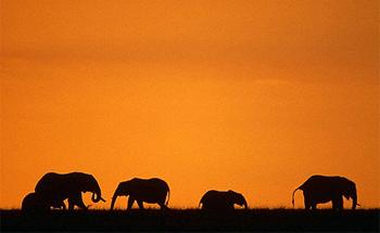 herd-of-african-elephants.jpg