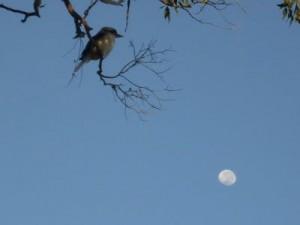 birdsky.JPG